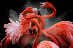 Black Friday Photo by Pedro Jarque Krebs — National Geographic Your Shot