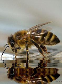 #lefonceur #amvidutrading #Miel #déguster #crowdfunding #citation #crowdlending #argent #abeilles #trading #felins #écoSystème #merveilles #dégustation #découvertes #sirop #deguster #decouvert #lolivié971 #ChikouSpan