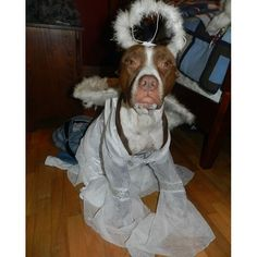 From our 2013 Furreaky Halloween Costume Contest. Like if your dog is your little angel Halloween Costume Contest, Funny Halloween Costumes, Rescue Dogs, Animal Rescue, Bully Sticks, Dog Years, Pet Costumes, Pet Treats, Cat Food