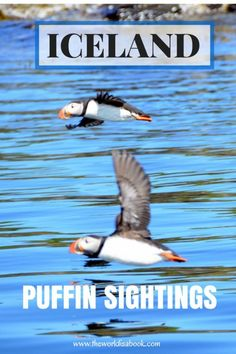 Learn all about the Atlantic puffins and go virtually on a Puffin Tour in Iceland with kids.   Family Travel