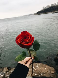 this rose I'm giving to you. Flower Wallpaper, Wallpaper Backgrounds, Iphone Wallpaper, Mekka Islam, Red Flowers, Red Roses, Rose Tumblr, Aesthetic Roses, Aesthetic Pictures