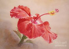 Red Hibiscus No.2 Painting by Lisa Pope - Red Hibiscus No.2 Fine Art Prints and Posters for Sale