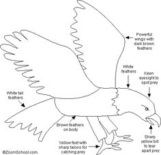 Bald Eagle Printout Nice printout for the 3 Cheers for Animals Journey to send home with the girls Girl Scout Badges, Girl Scout Troop, Eagle Facts, Eagle Craft, Science Symbols, Enchanted Learning, Eagle Project, Wood Badge, Daisy Girl Scouts