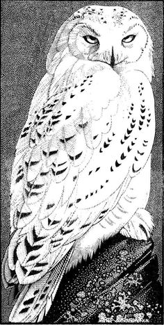 Snowy Owl ~ Wood Engraving ~ Colin See-Paynton ~ The Wildlife Art Gallery                                                                                                                                                                                 More