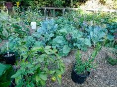 You can read and give comment to Urban permaculture: http://bobbyniel.bloghi.com/