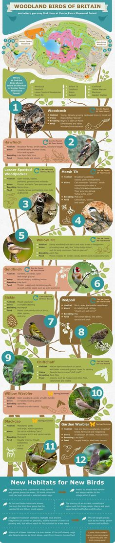 Woodland Birds of Britain and where you may find them at Center Parcs Sherwood Forest. This would come in useful if we were to visit, we love nature and bird watching x Image Infographics, Forest School Activities, Animals Information, Sherwood Forest, Outdoor Learning, Nature Journal, Animal Projects, Outdoor Fun, Wildlife Photography