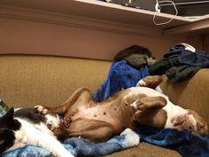 Babys, Fur, Dogs, Animals, Babies, Animales, Animaux, Pet Dogs, Newborn Babies