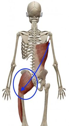 """The """"Hidden Survival Muscle"""" In Your Body Missed By Modern Physicians That Keep Millions Of Men And Women Defeated By Pain, Frustrated With Belly Fat, And Struggling To Feel Energized Every Day… Hip Anatomy, Gross Anatomy, Human Body Anatomy, Human Anatomy And Physiology, Muscle Anatomy, Medical Anatomy, Muscles In Your Body, Muscle Body, Anatomy Reference"""