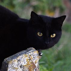 Black cat in Port Isaac. Such a beautiful face and beautiful rich color.