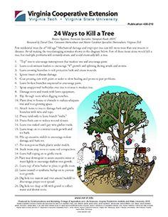 Cover, 24 Ways to Kill a Tree