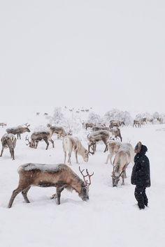 howfarfromhome, ren geyikleri, sami halkı, norveç, kuzey kutup bölgesi