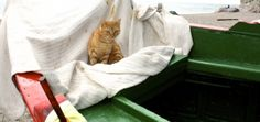 one of the local cats enjoying a comfy spot on one of the beached fishing boats