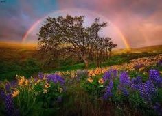 Spring Showers Columbia Hills, Washington A very lucky moment of incredible light at a place I know well. The rainbow and spring colors went very well together on this sunrise. Photo © copyright by Marc Adam--- Photographer Marc Adamus Cool Photos, Beautiful Pictures, Beautiful Places, Spring Shower, Digital Photography School, Belleza Natural, Over The Rainbow, Landscape Photographers, Mother Nature