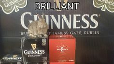 Guinness Draught, Dublin, Type 3, Bunnies, Theater, How To Make, Life, Facebook, Rabbits