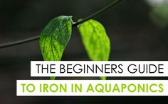 The Beginner's Guide to Iron in Aquaponics
