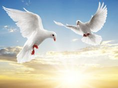 #White Dove releases are such a nice touch to the ceremony Revs Kelly & Pat of A Forever After Wedding, have some beautiful dove ceremonies to choose from
