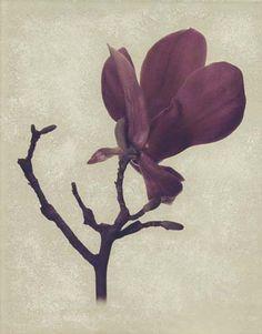 "Flowers in Neutral Moment ""Magnolia"" Polaroid image transfer 8x10 archival pigment print Photo by Soichi Oshika"