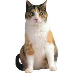 MeowStore.com is the premier store for cat themed jewelry, t-shirts, socks, party supplies and gifts the store for people who like cats and love to express it