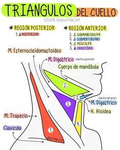 Medicine Notes, Sports Medicine, Dental Hygiene School, Medical School, Med Student, Student Studying, School Organization Notes, Medical Anatomy, Medical Illustration