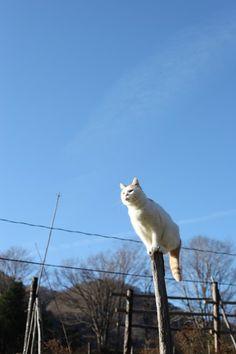 てっぺん - かご猫 Blog