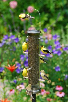 Wild Bird Trading Co. Home