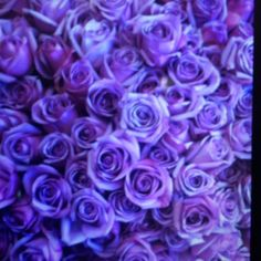 fabulous vancouver florist 365 roses, bouquet for One year anniversary...one lucky girl! #surreyflorist #floralarrangement #flowers #wedding #bouquets #weddingflowers #freshflowers #indianweddings #receptionflowers #anniversaryflowers by @surreyflowershop  #vancouverflorist #vancouverwedding #vancouverflorist #vancouverwedding #vancouverweddingdosanddonts
