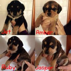 Our new puppies found in a car park today, 5 weeks old and looking for new homes. www.petsinspain.net