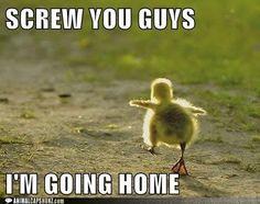 duckyy