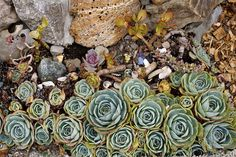 A Cape Cod Summer in Stinson Beach & Tomales Bay California Style, Northern California, Tomales Bay, Stinson Beach, Cape Cod, Succulents, Gardens, Nature, Plants