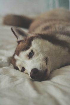 ikwt:Relaxing in bed (Jonathan Garcia)   ikwt