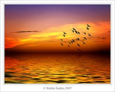 There's just something about the silhouettes of birds over the sea, with the golden sunset in the background...like a dream.