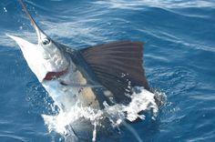 !!!Live the Dream!!!! Enjoy the fishing experience. www.costaricadreams.com fish costa rica