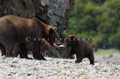 Alaskan Brown Bear mom and cub by Suzi Eszterhas