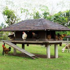 Chicken Coop Designs That Are Stylish - Hühner - Chicken Recipes Chicken Hut, Wild Chicken, Small Chicken Coops, Chicken Coop Run, Backyard Chicken Coops, Building A Chicken Coop, Chickens Backyard, Chicken Houses, Chicken Coop Designs
