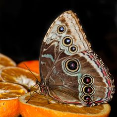 unusual butterfly by Simona Forte