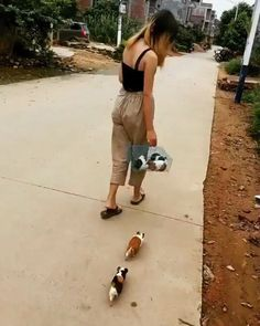 Woman chased by herd of angry swine Cute Funny Animals, Funny Animal Pictures, Cute Baby Animals, Animals And Pets, Cute Pictures, Pet Guinea Pigs, Guinea Pig Care, Pet Pigs, Guinie Pig
