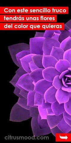Precious Tips for Outdoor Gardens - Modern Garden Pool, Shade Garden, Herb Garden, Garden Landscaping, Neon Spray Paint, Oxalis Triangularis, Easy Herbs To Grow, Growing Herbs Indoors, Seed Shop