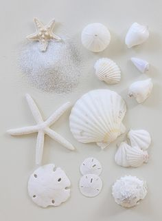 sea-sh0re:  White shells by Daniel Hurst Photography on Flickr.