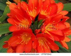 large flower bright color - stock photo