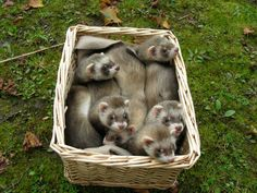 A basketful of cute!