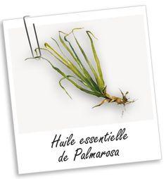 Huile essentielle Palmarosa Aroma-Zone