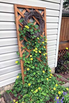 A Black-Eyed Susan Vine updated with photos throughout the summer so you can see how fast they grow and how utterly gorgeous this flowering vine is.