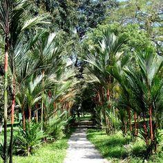 Lancetilla Botanical Garden Honduras