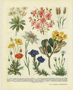 Cabinet Of Natural Curiosities Flowers