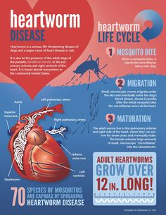 All about heartworm