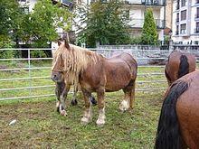 Horse animal funny free porn pics