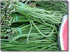 Fagioli Serpenti, Tuscan Snake Beans - © Kyle Phillips Licensed to About.Com