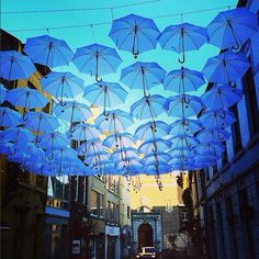Hasselt,Belgium This just makes me so happy. Imagine sheltering under these parapluis :) pinner: Demi Nelissen