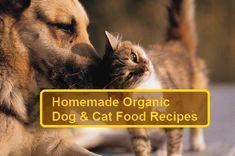 10 Healthy Organic Homemade Dog (& Cat) Food Recipes & Treats