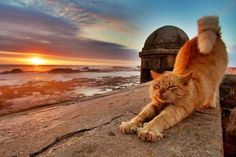 猫と風景の画像 06|ねこLatte+